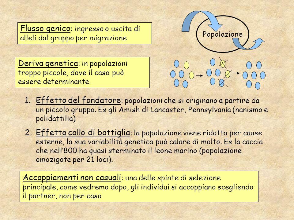 Flusso genico: ingresso o uscita di alleli dal gruppo per migrazione