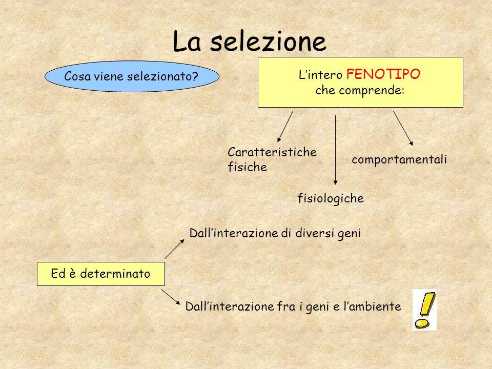 La selezione L'intero FENOTIPO che comprende: Cosa viene selezionato