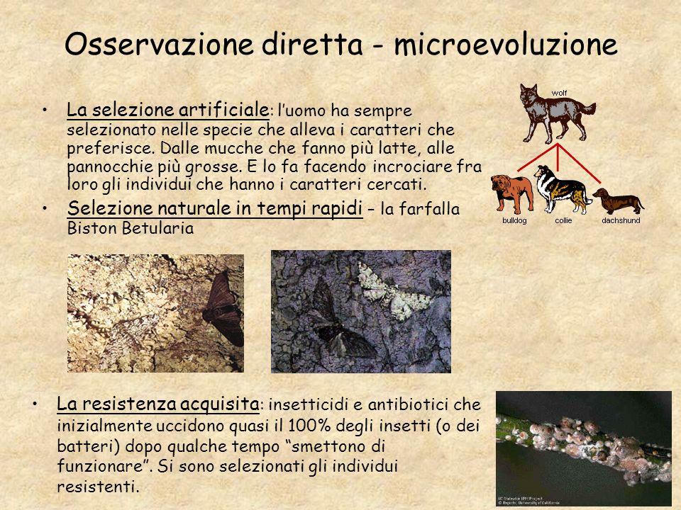 Osservazione diretta - microevoluzione