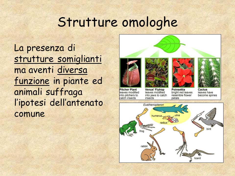 Strutture omologheLa presenza di strutture somiglianti ma aventi diversa funzione in piante ed animali suffraga l'ipotesi dell'antenato comune.