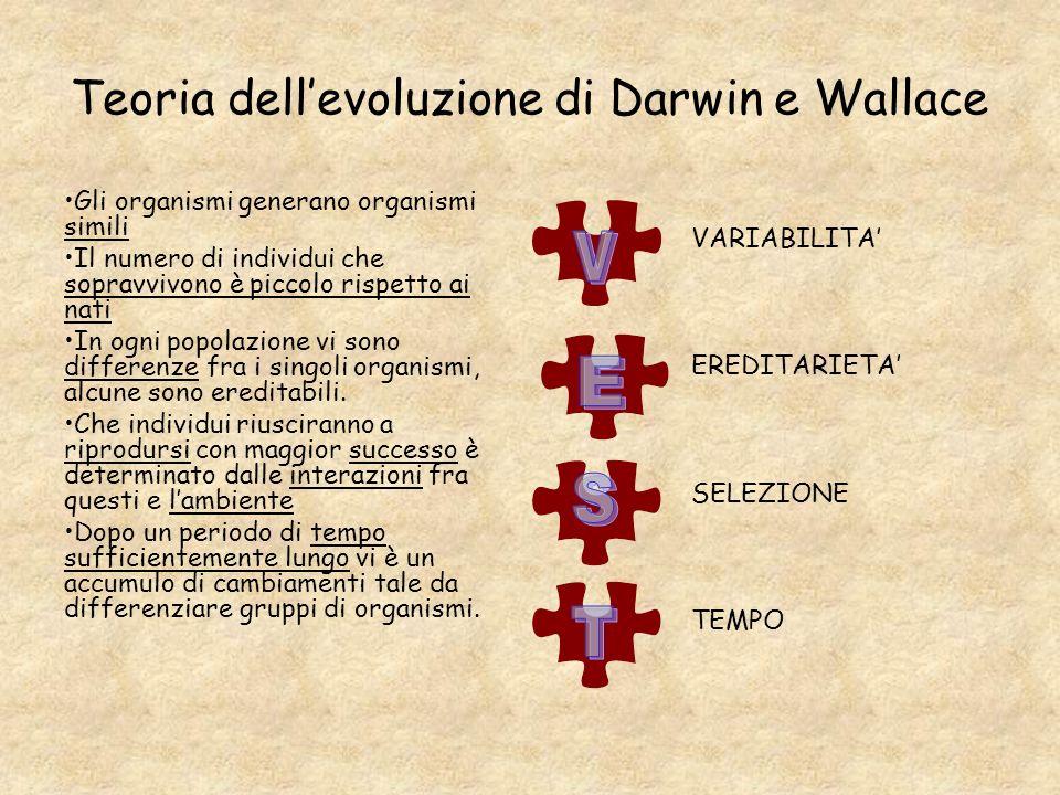 Teoria dell'evoluzione di Darwin e Wallace