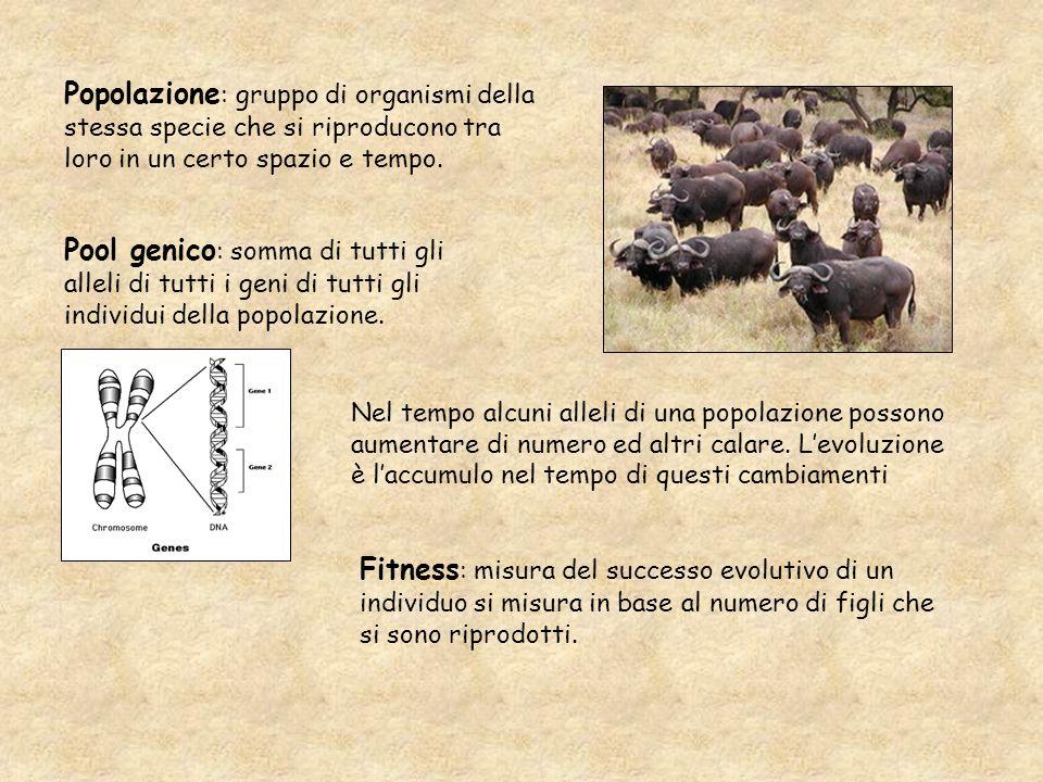Popolazione: gruppo di organismi della stessa specie che si riproducono tra loro in un certo spazio e tempo.