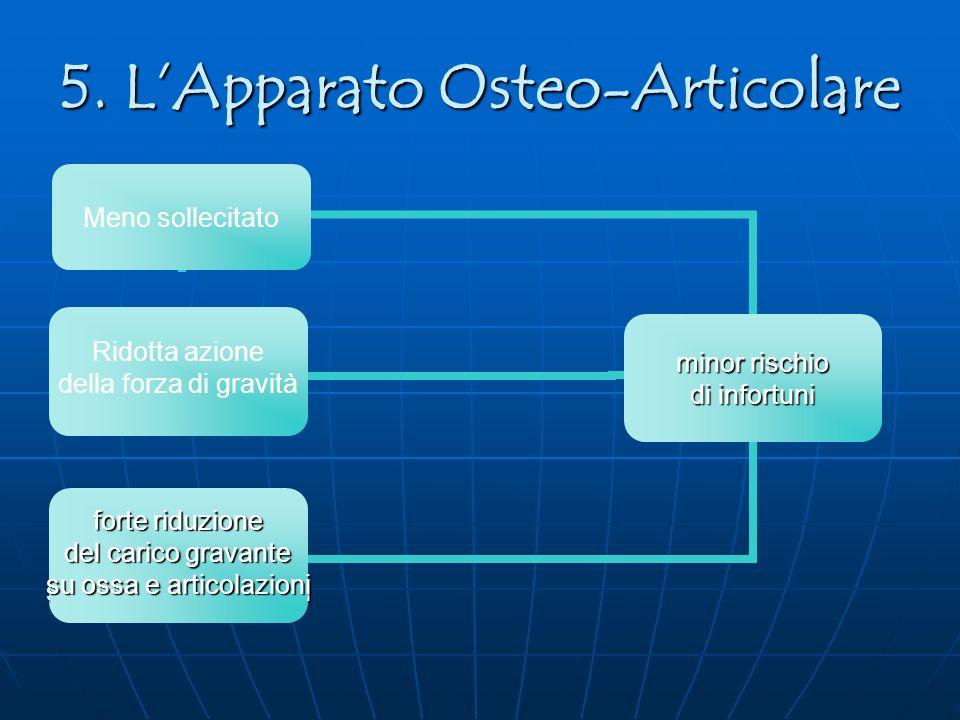 5. L'Apparato Osteo-Articolare