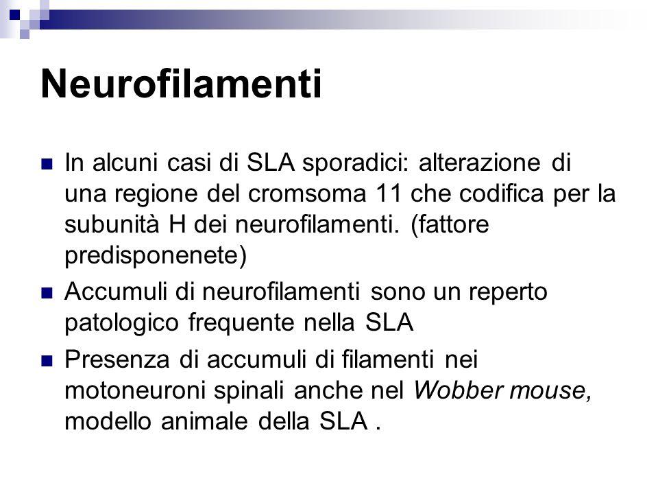 Neurofilamenti