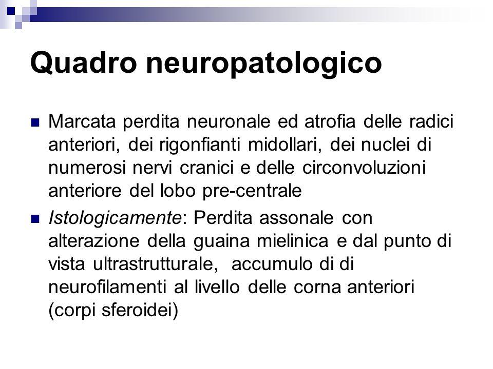 Quadro neuropatologico