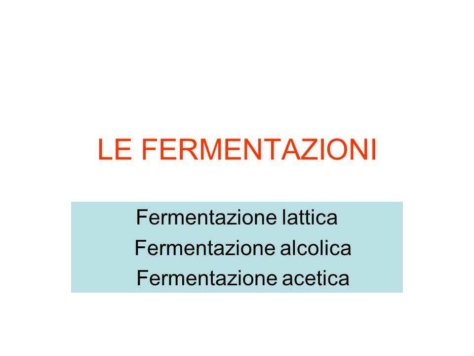 Fermentazione lattica Fermentazione alcolica Fermentazione acetica
