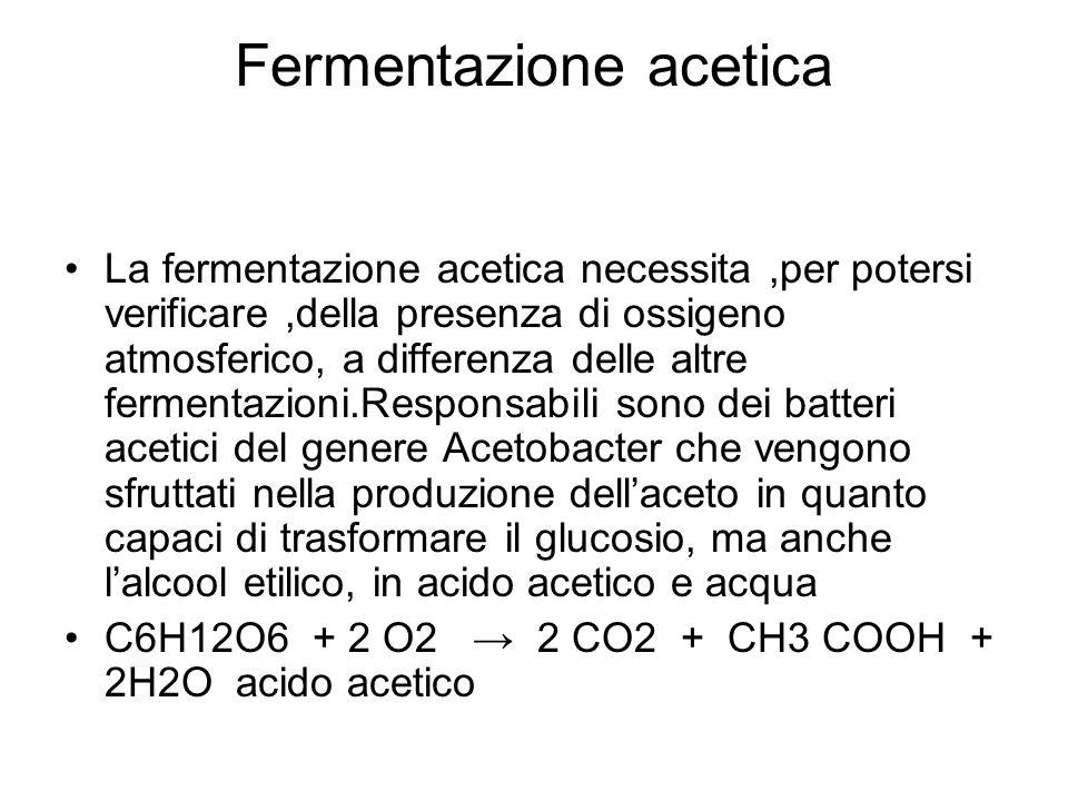 Fermentazione acetica