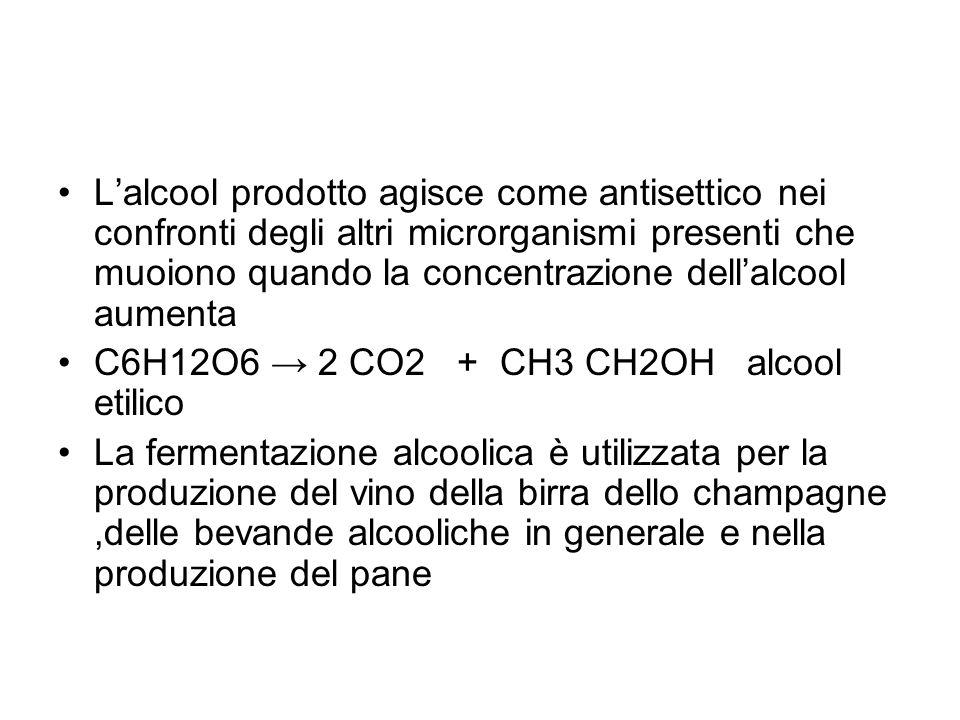 L'alcool prodotto agisce come antisettico nei confronti degli altri microrganismi presenti che muoiono quando la concentrazione dell'alcool aumenta