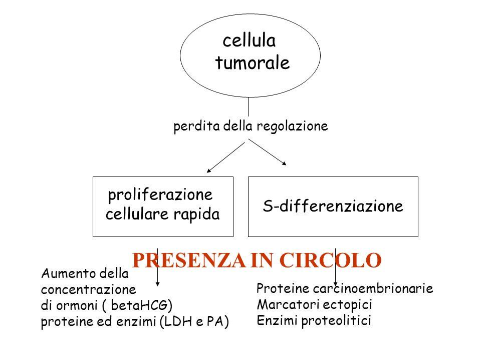 cellula tumorale proliferazione cellulare rapida S-differenziazione
