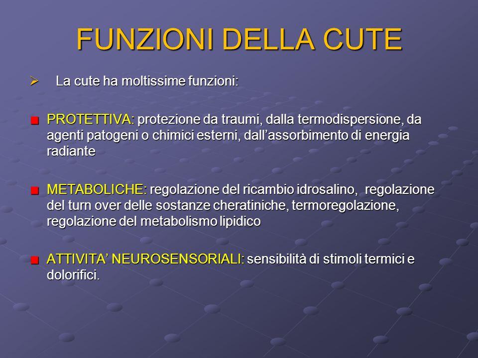FUNZIONI DELLA CUTE La cute ha moltissime funzioni: