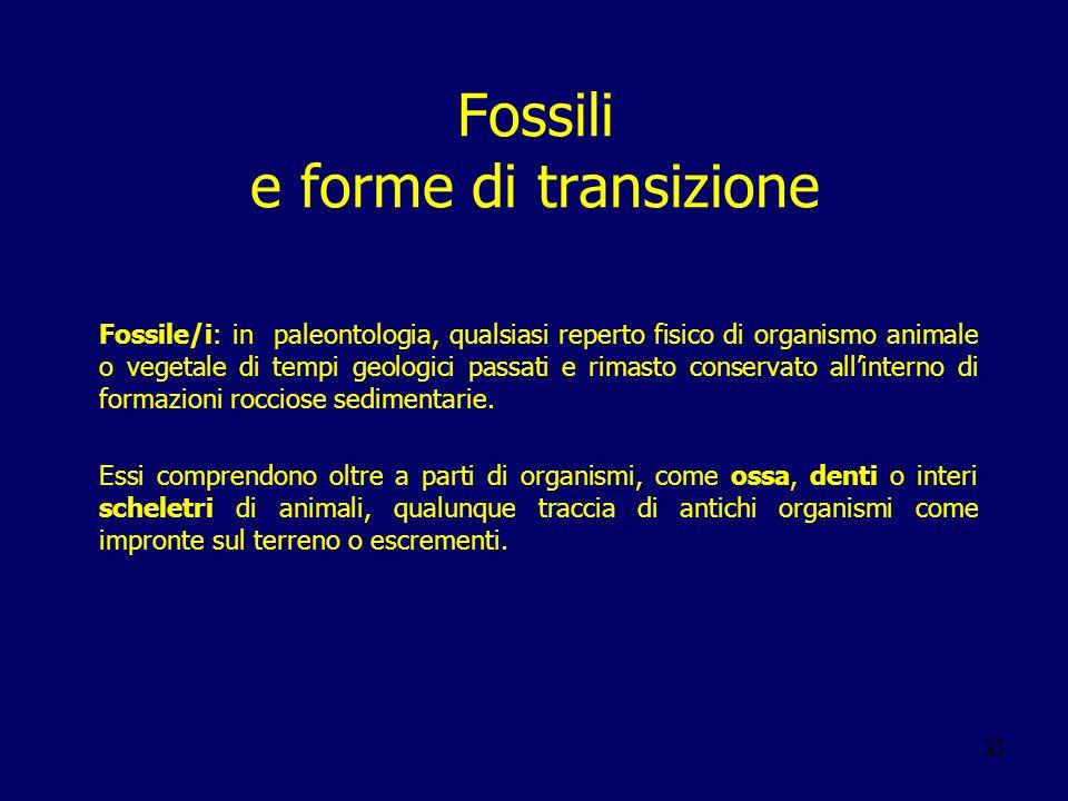 Fossili e forme di transizione