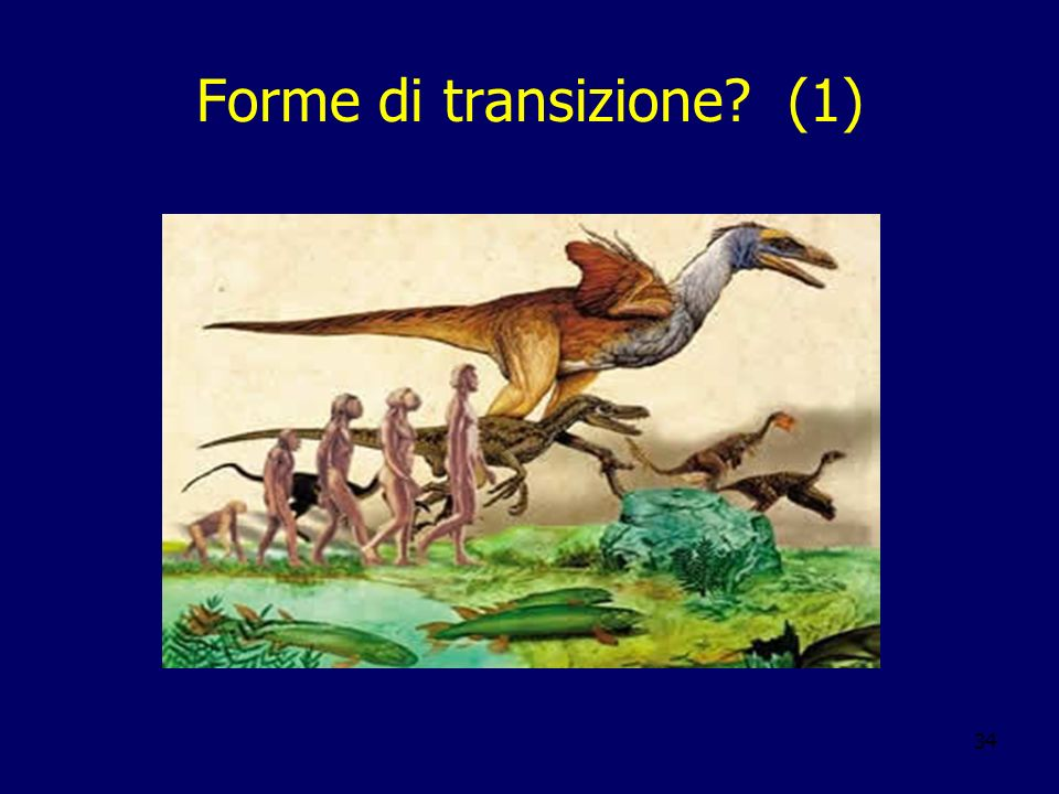 Forme di transizione (1)