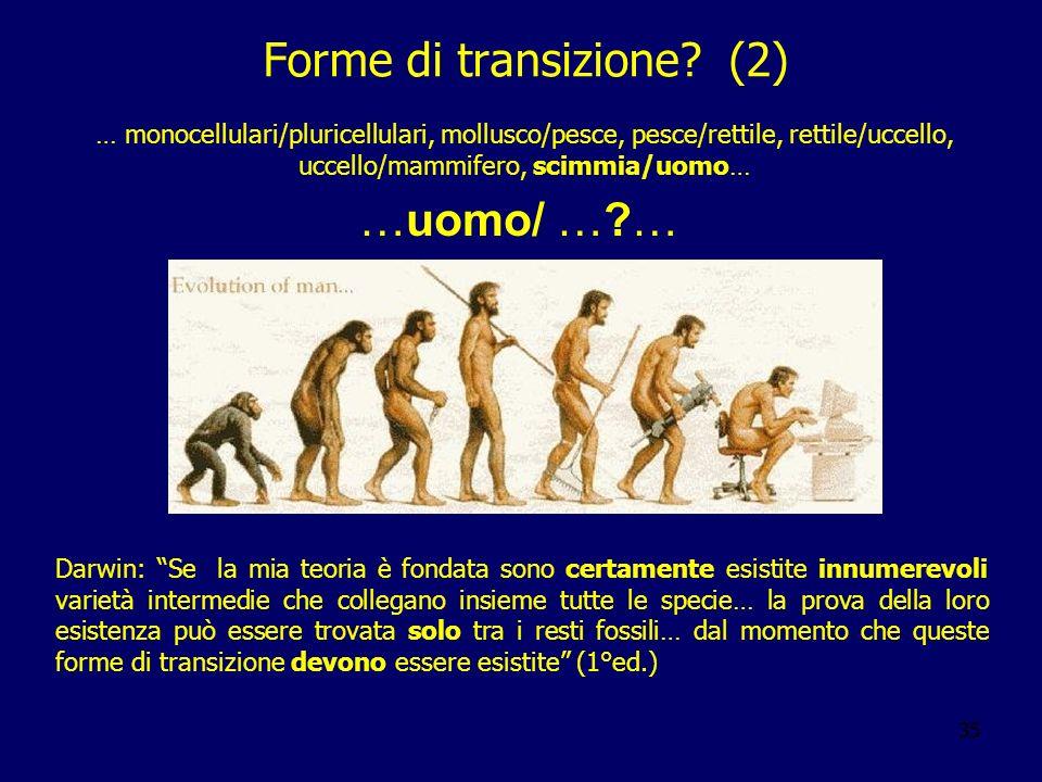 Forme di transizione (2)