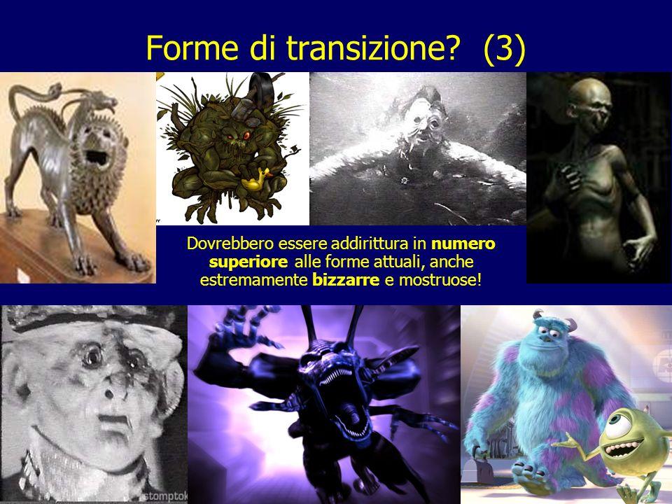 Forme di transizione (3)