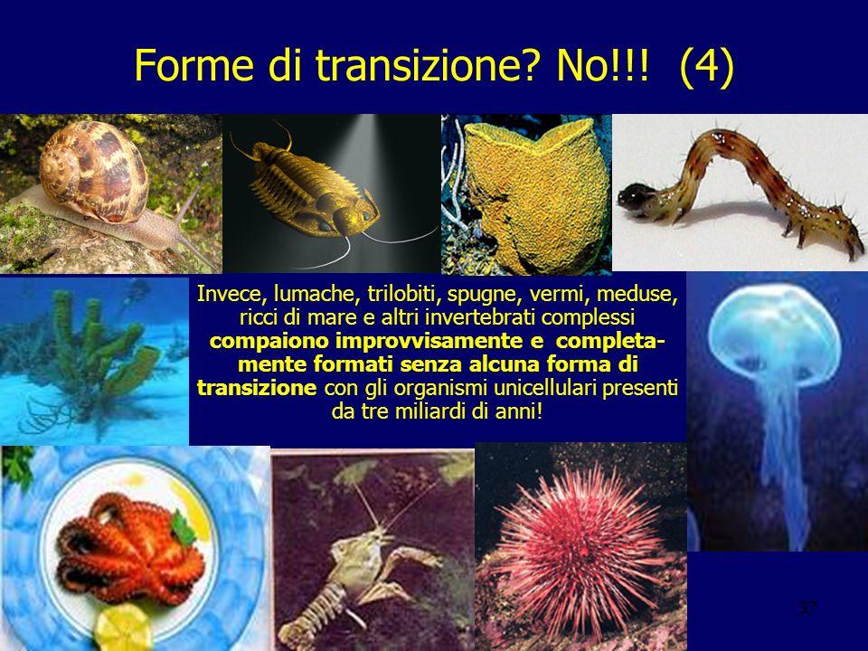 Forme di transizione No!!! (4)