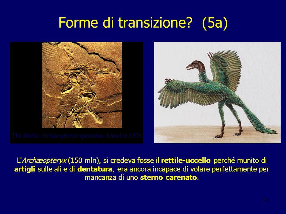 Forme di transizione (5a)