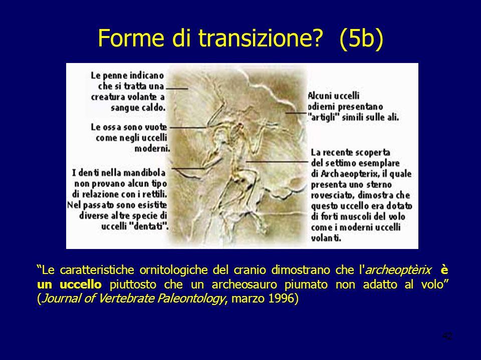 Forme di transizione (5b)