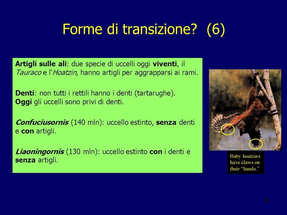 Forme di transizione (6)