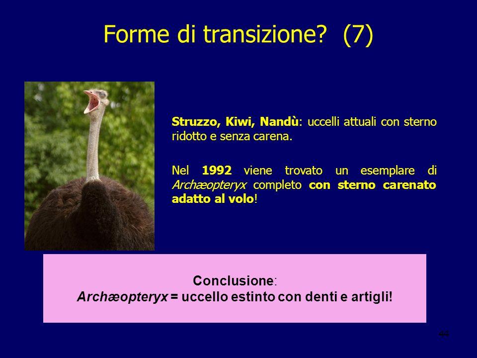 Forme di transizione (7)