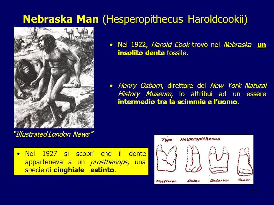 Nebraska Man (Hesperopithecus Haroldcookii)