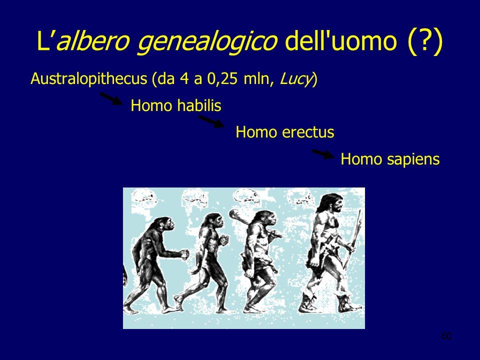 L'albero genealogico dell uomo ( )