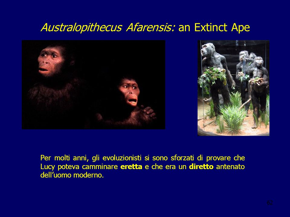 Australopithecus Afarensis: an Extinct Ape