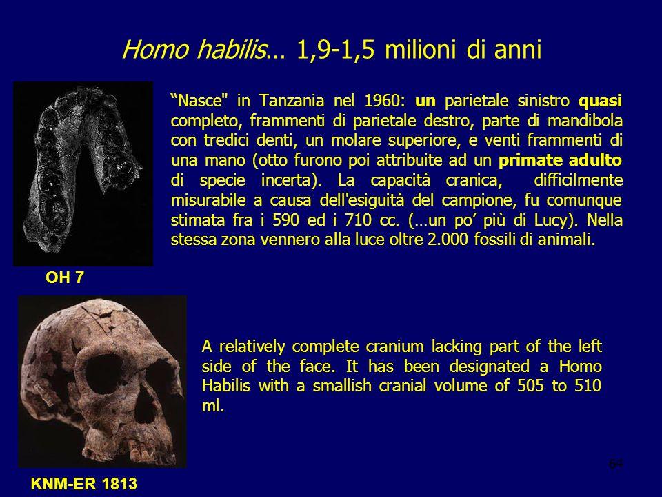 Homo habilis… 1,9-1,5 milioni di anni