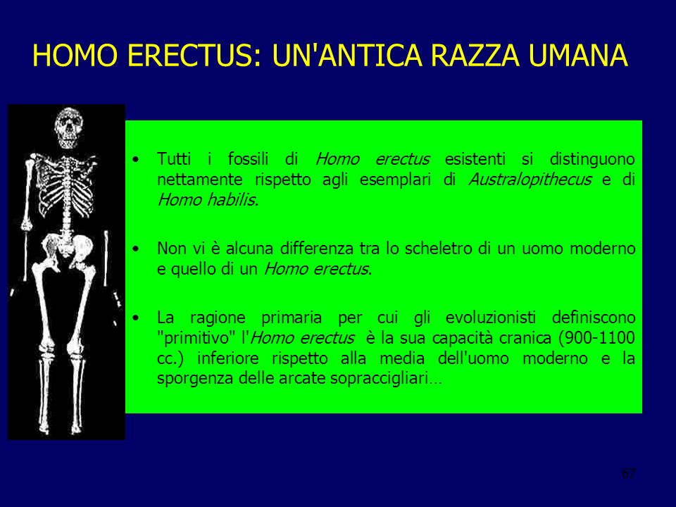 HOMO ERECTUS: UN ANTICA RAZZA UMANA