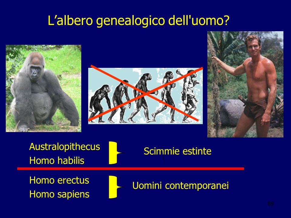 L'albero genealogico dell uomo