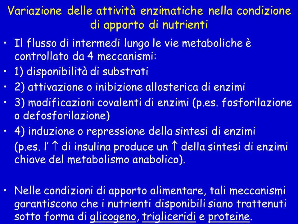 Variazione delle attività enzimatiche nella condizione di apporto di nutrienti