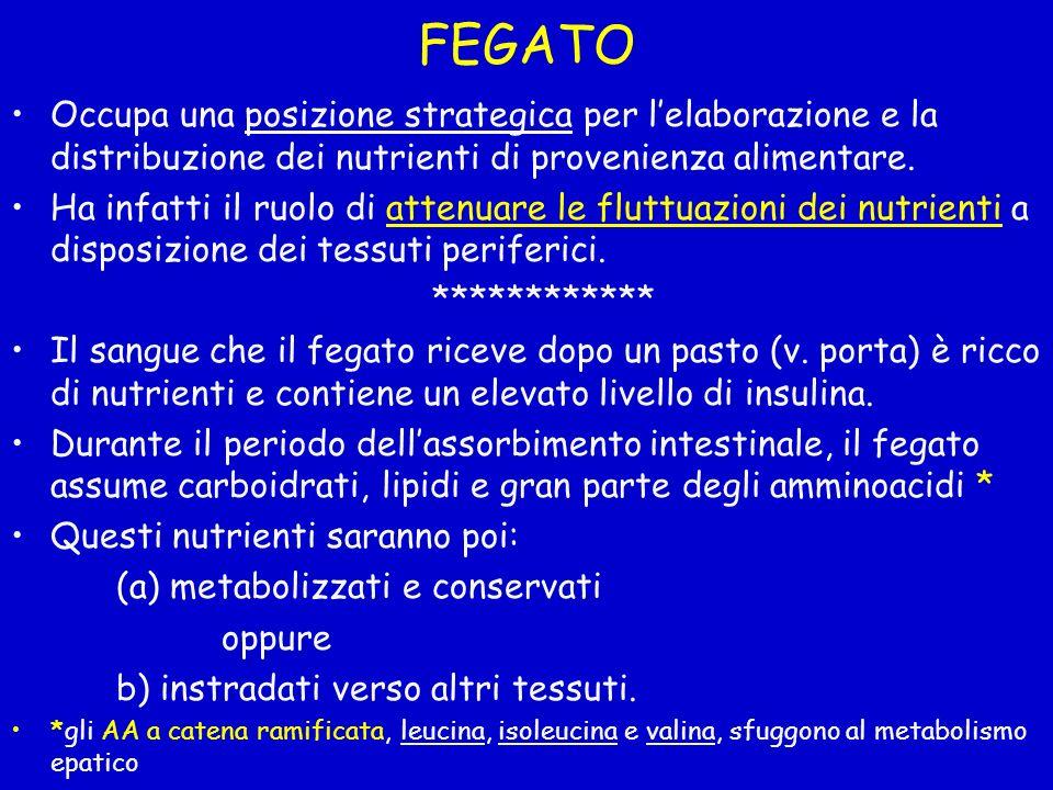 FEGATO Occupa una posizione strategica per l'elaborazione e la distribuzione dei nutrienti di provenienza alimentare.