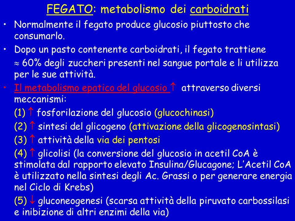 FEGATO: metabolismo dei carboidrati