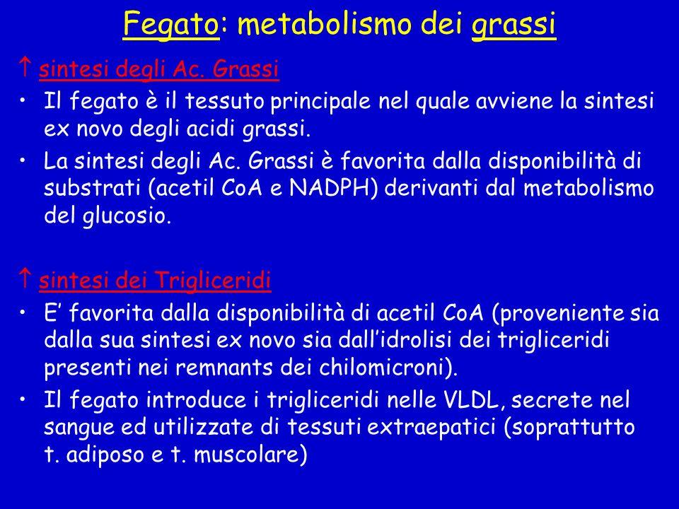 Fegato: metabolismo dei grassi