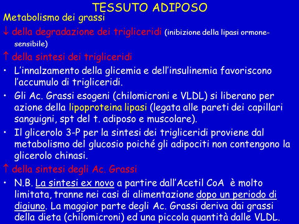 TESSUTO ADIPOSO Metabolismo dei grassi