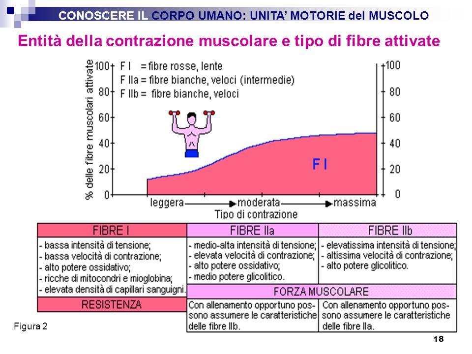 Entità della contrazione muscolare e tipo di fibre attivate