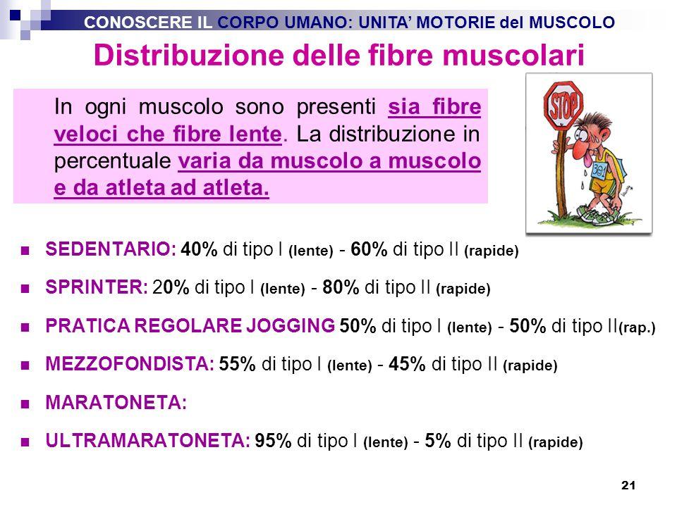 Distribuzione delle fibre muscolari