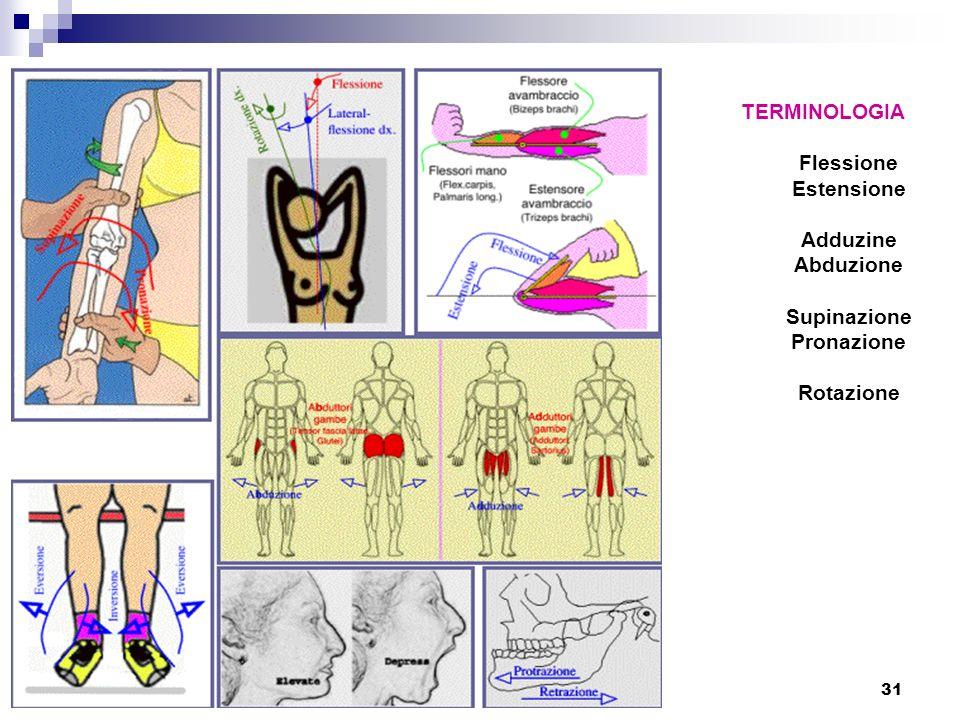 TERMINOLOGIA Flessione Estensione Adduzine Abduzione Supinazione Pronazione Rotazione
