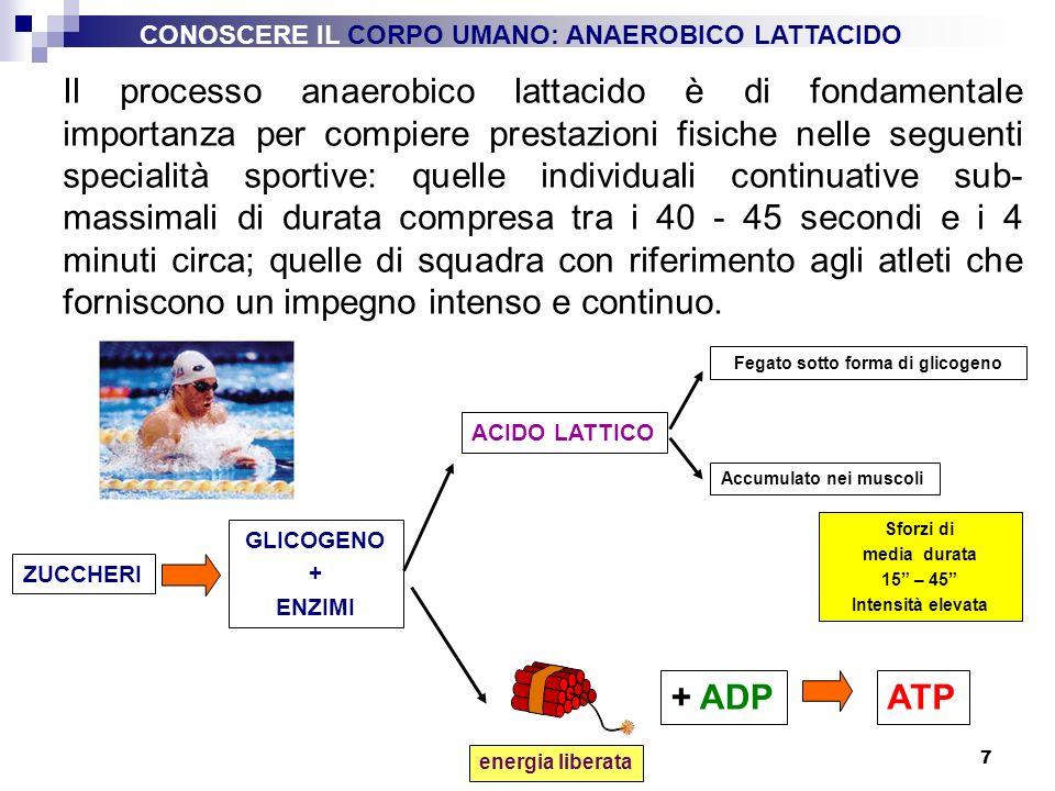 Fegato sotto forma di glicogeno