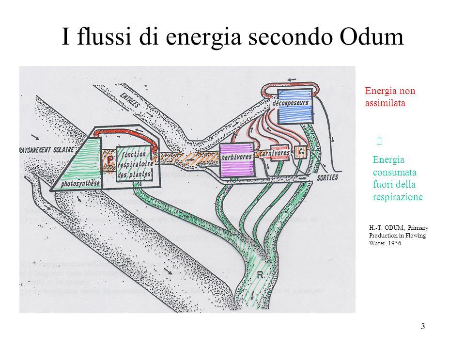 I flussi di energia secondo Odum