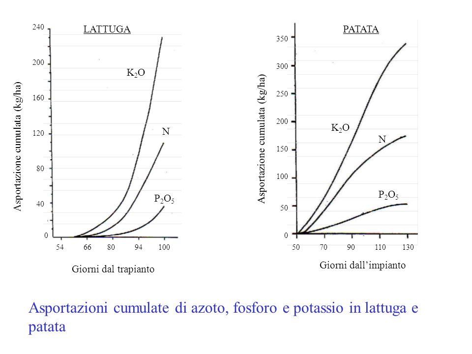 Asportazioni cumulate di azoto, fosforo e potassio in lattuga e patata