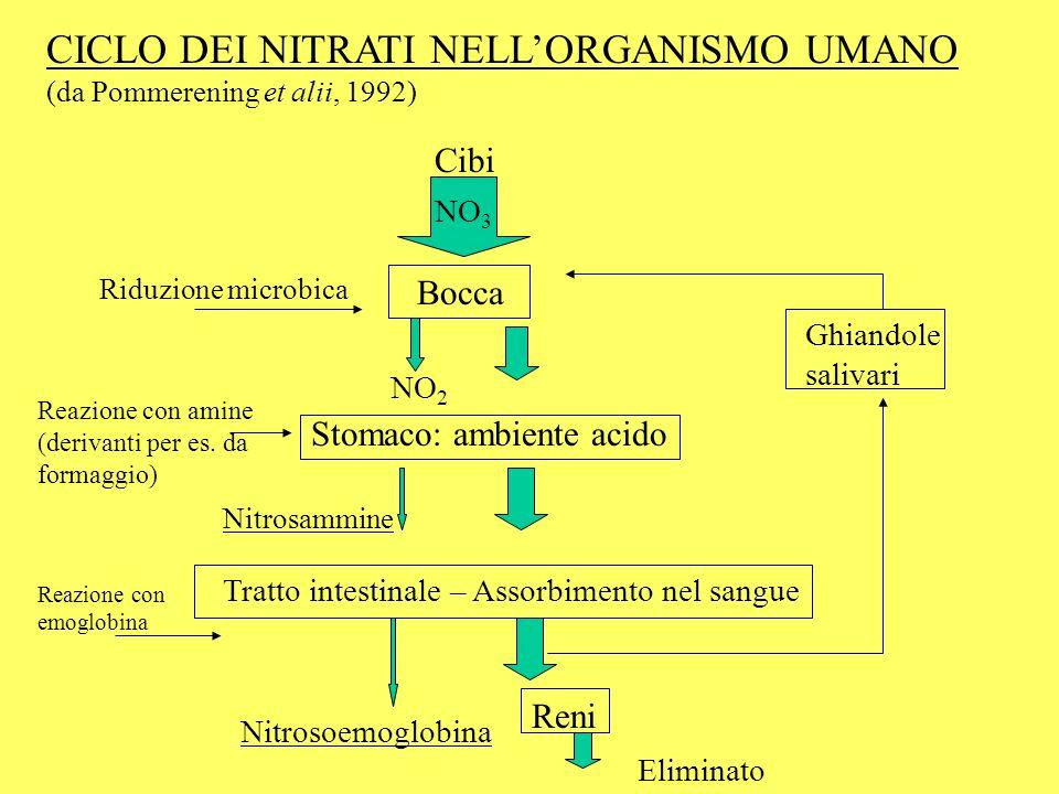 CICLO DEI NITRATI NELL'ORGANISMO UMANO (da Pommerening et alii, 1992)