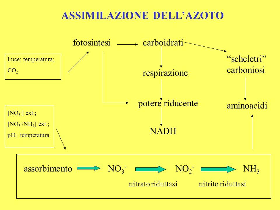 ASSIMILAZIONE DELL'AZOTO