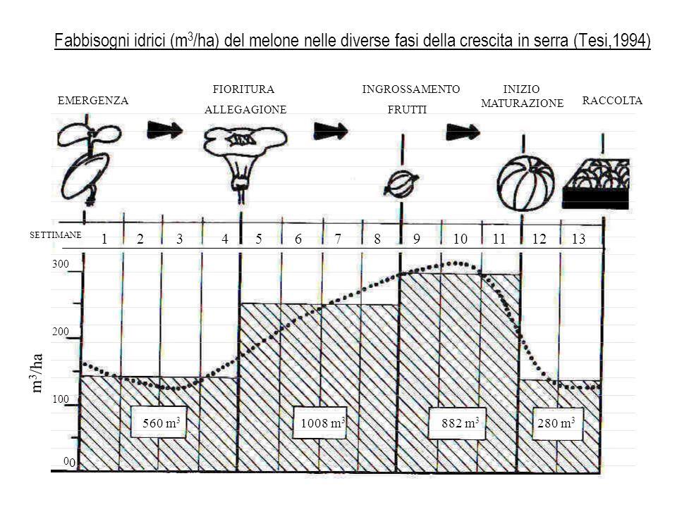 Fabbisogni idrici (m3/ha) del melone nelle diverse fasi della crescita in serra (Tesi,1994)