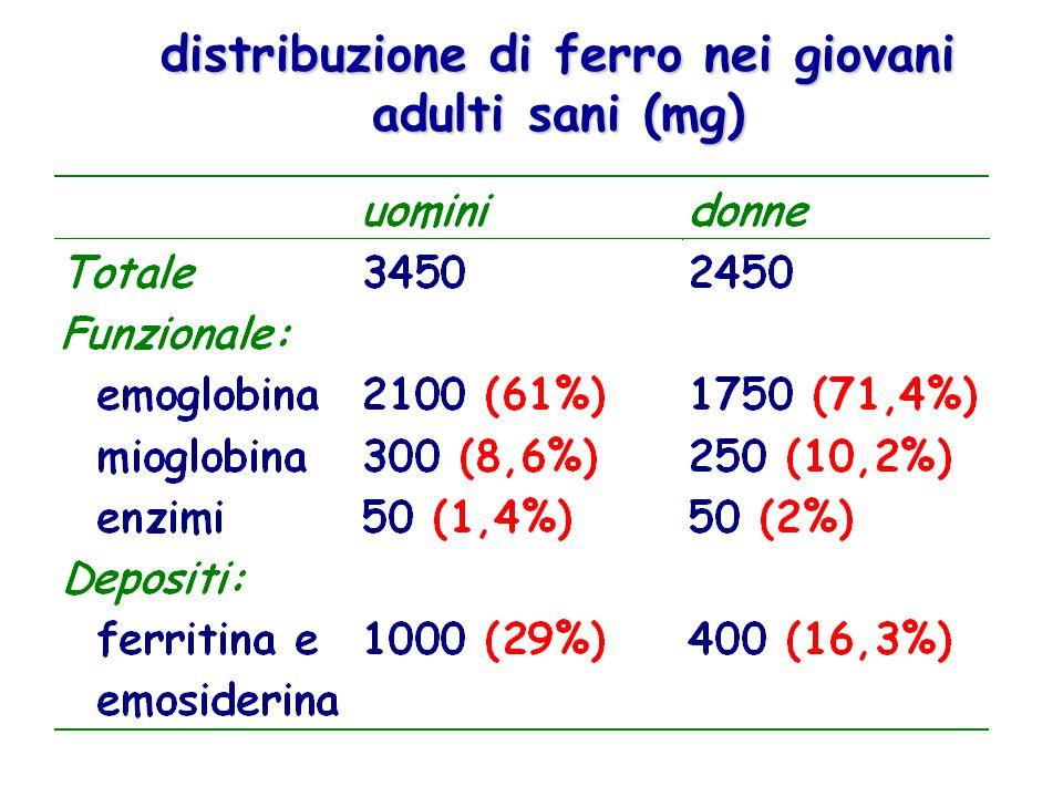 distribuzione di ferro nei giovani adulti sani (mg)