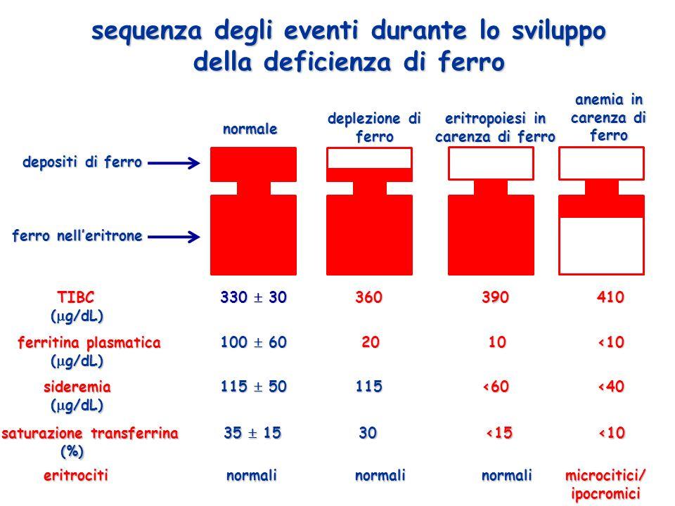 sequenza degli eventi durante lo sviluppo della deficienza di ferro