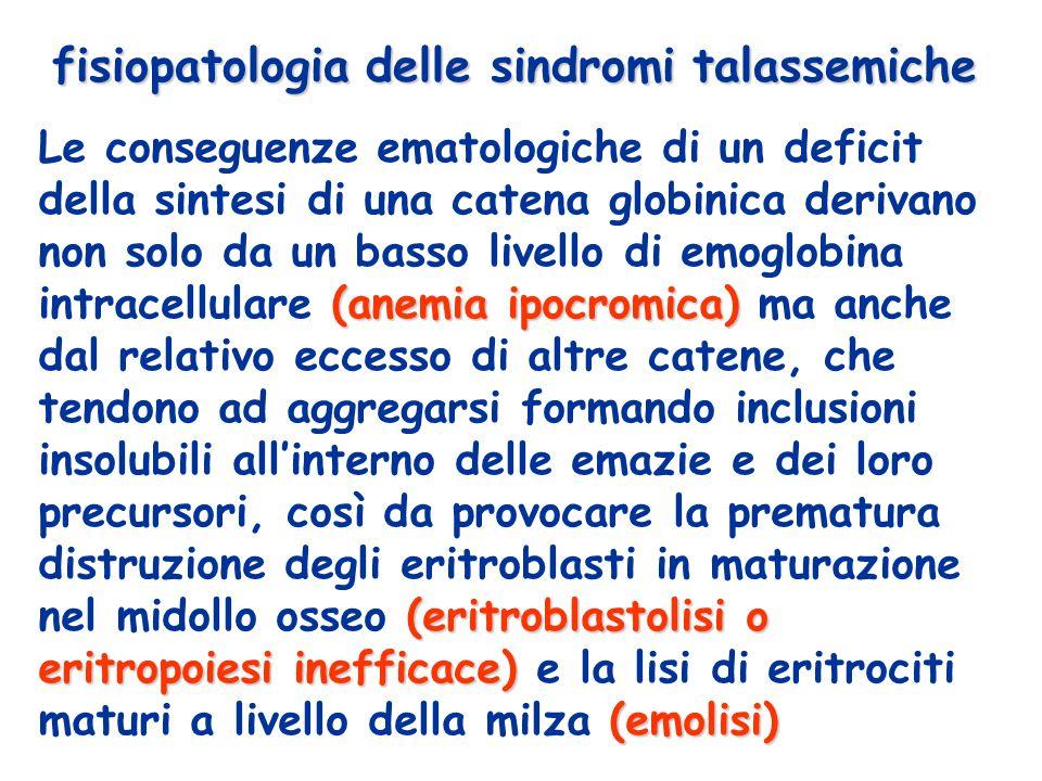 fisiopatologia delle sindromi talassemiche