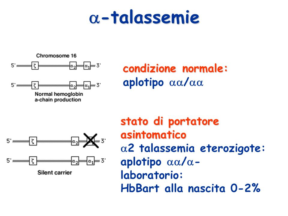 -talassemie condizione normale: aplotipo /