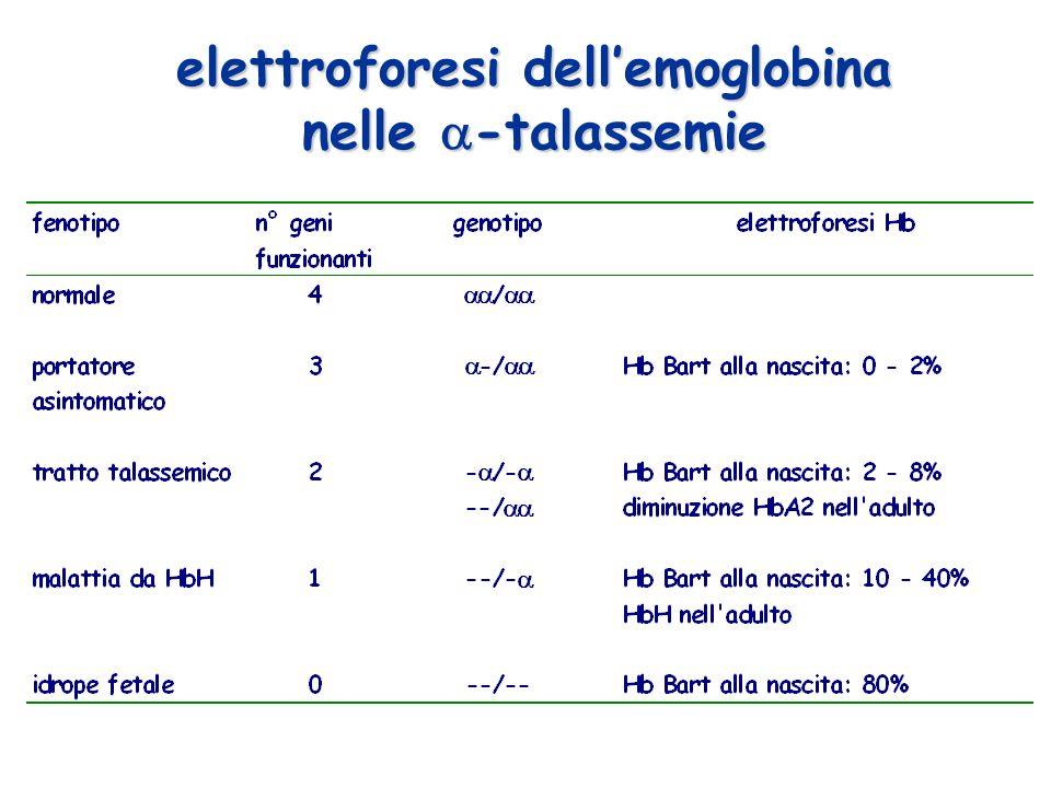elettroforesi dell'emoglobina nelle -talassemie