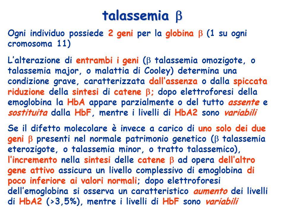 talassemia  Ogni individuo possiede 2 geni per la globina  (1 su ogni cromosoma 11)