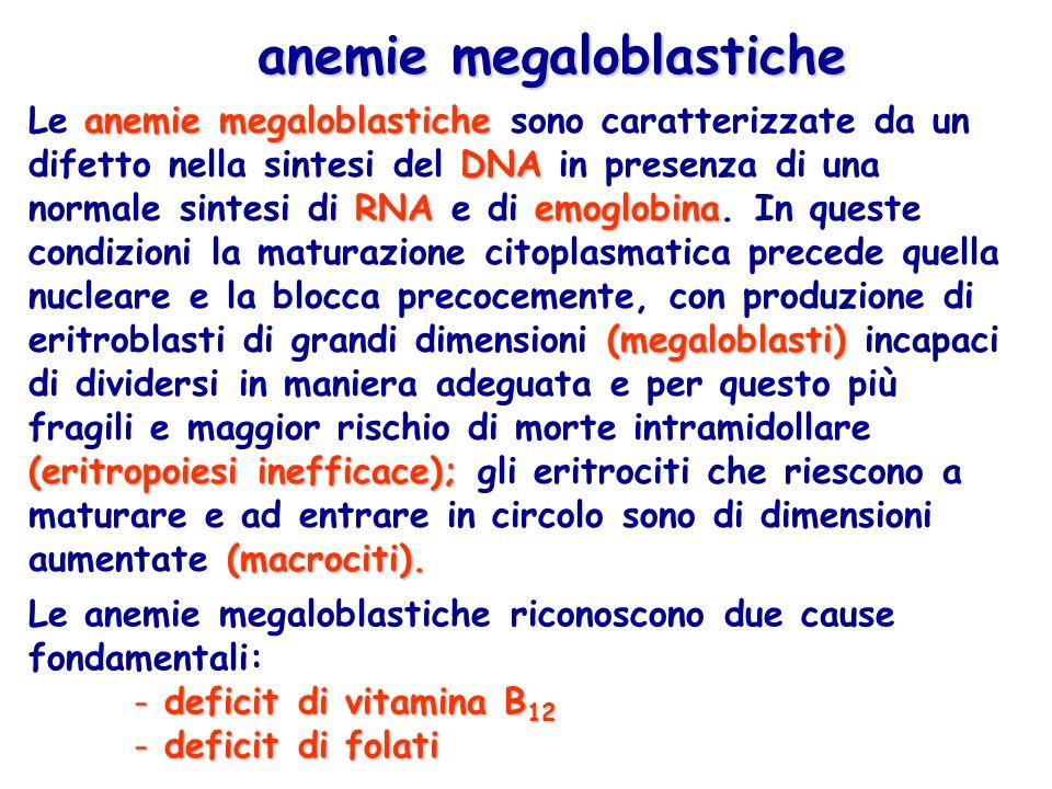 anemie megaloblastiche